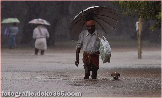 Naturzerstörung in Chennai (14)