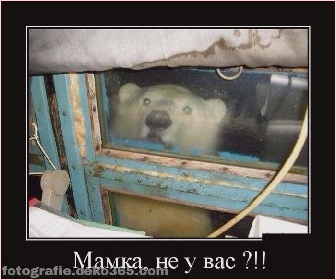 Tiere leckten gerade das Glas (4)