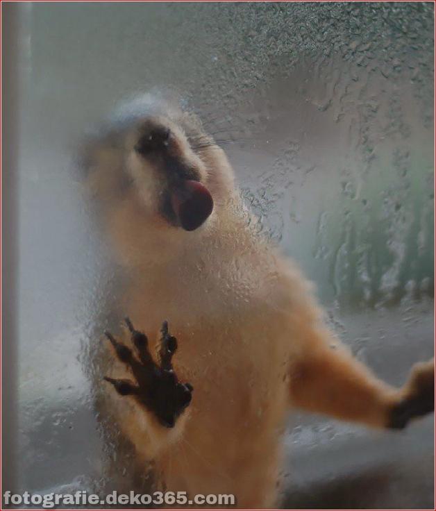 Tiere leckten gerade das Glas (18)