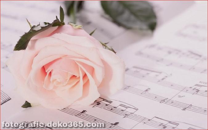 104371052_1375958779_otlichnye_oboi_s_rozami_593439