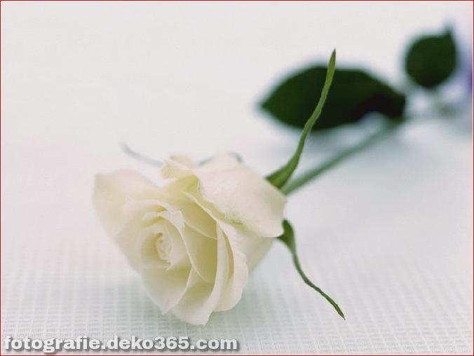 104371048_1375958795_otdyh_s_rozoi1600x1200
