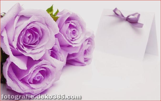 104371023_1375958787_beautifulroseflowers15