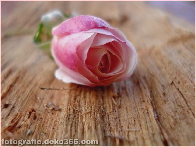 Der wunderbare Rosenduft_5c903d0fda46b.jpg