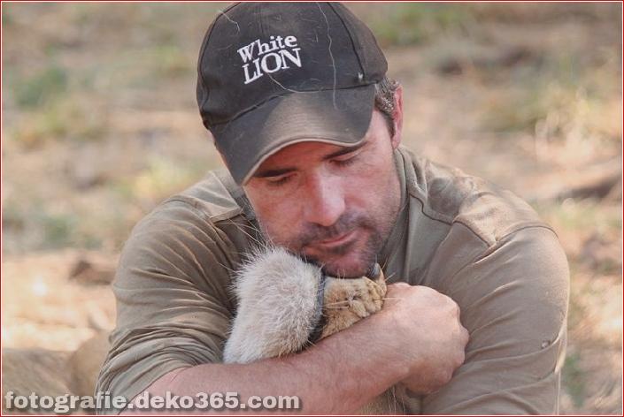 Kevin Richardson, der Löwenflüsterer (2)