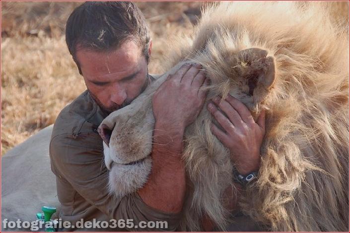 Kevin Richardson, der Löwenflüsterer (4)