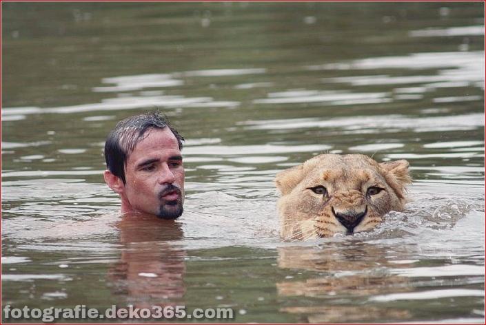 Kevin Richardson, der Löwenflüsterer (5)