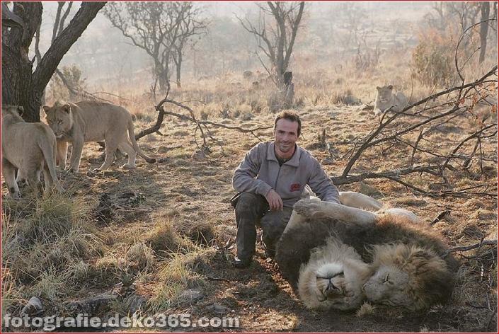 Kevin Richardson, der Löwenflüsterer (7)