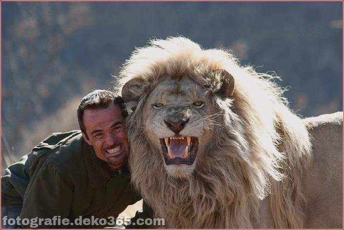 Kevin Richardson, der Löwenflüsterer (11)