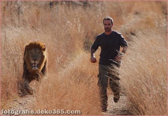 Kevin Richardson, der Löwenflüsterer (12)
