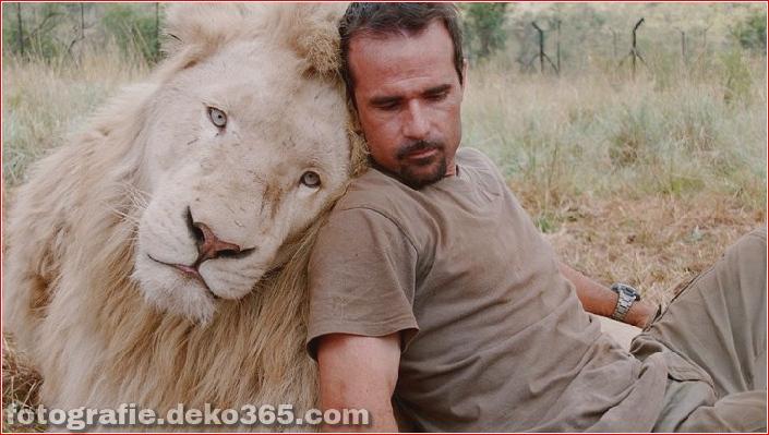 Kevin Richardson, der Löwenflüsterer (13)