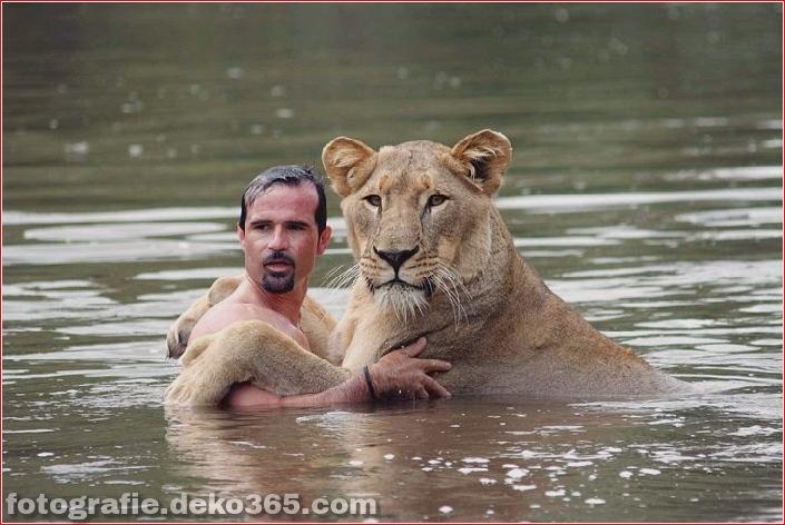 Kevin Richardson, der Löwenflüsterer (14)