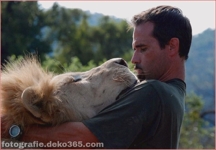 Kevin Richardson, der Löwenflüsterer (15)