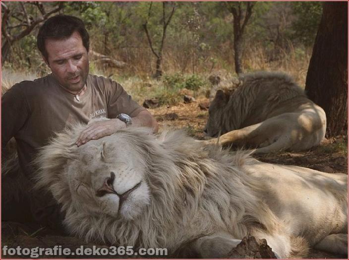 Kevin Richardson, der Löwenflüsterer (20)