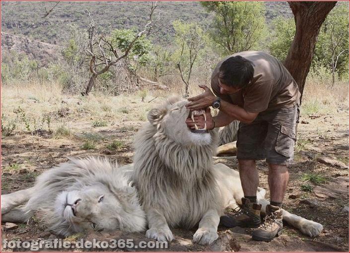 Kevin Richardson, der Löwenflüsterer (21)