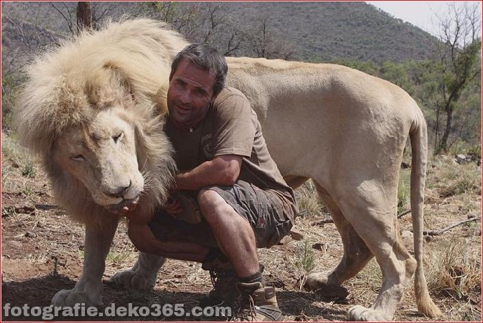Kevin Richardson, der Löwenflüsterer (22)