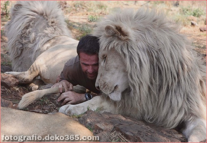 Kevin Richardson, der Löwenflüsterer (23)