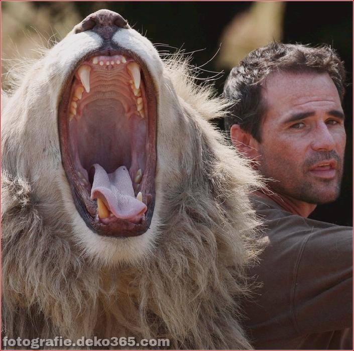 Kevin Richardson, der Löwenflüsterer (25)