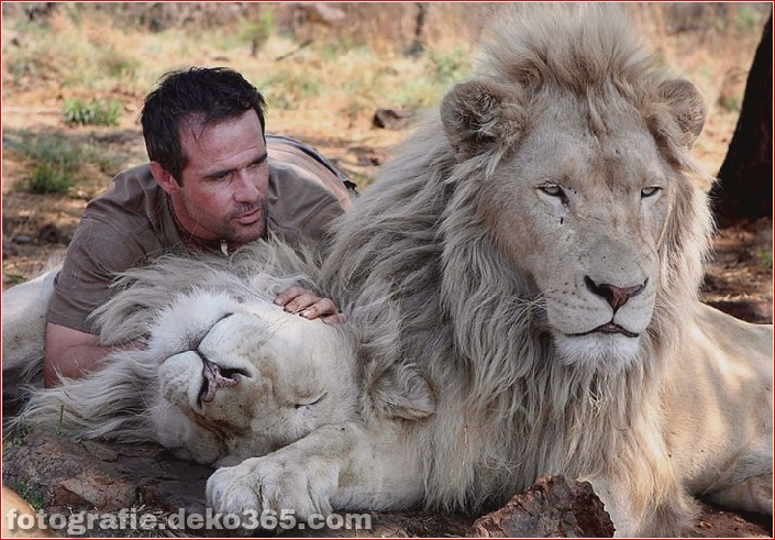 Kevin Richardson, der Löwenflüsterer (27)