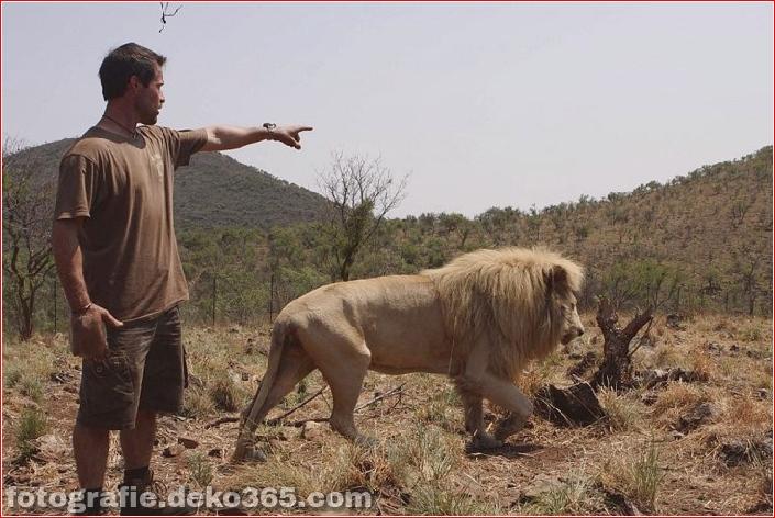 Kevin Richardson, der Löwenflüsterer (28)