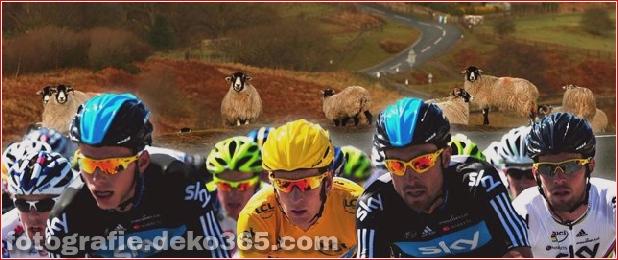 Tour de France lustige Bilder (3)