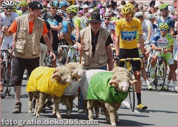 Tour de France lustige Bilder (5)