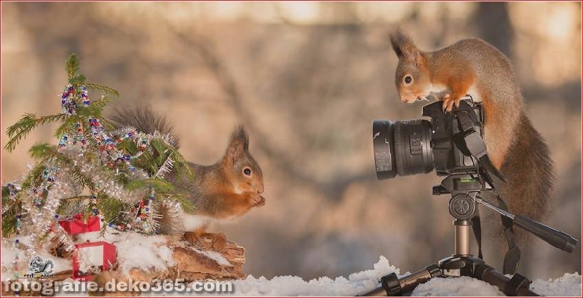 Eichhörnchen mit Weihnachten_5c8ffd0d0fe95.jpg