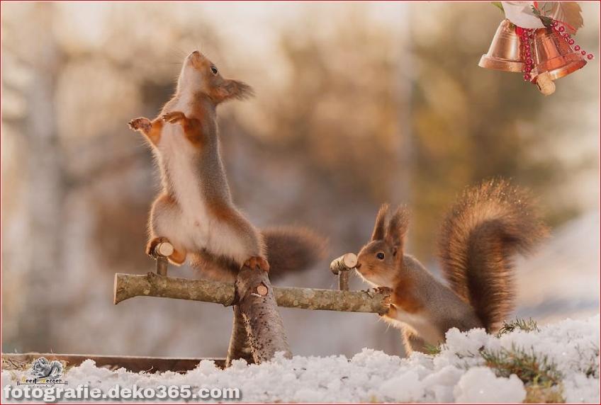 Eichhörnchen mit Weihnachten_5c8ffd0ea6580.jpg