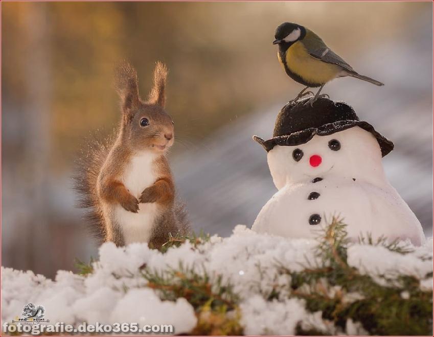 Eichhörnchen mit Weihnachten_5c8ffd10325c7.jpg
