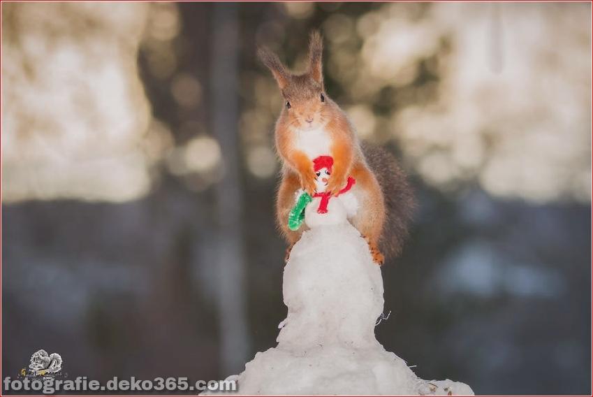 Eichhörnchen mit Weihnachten_5c8ffd1187f4e.jpg