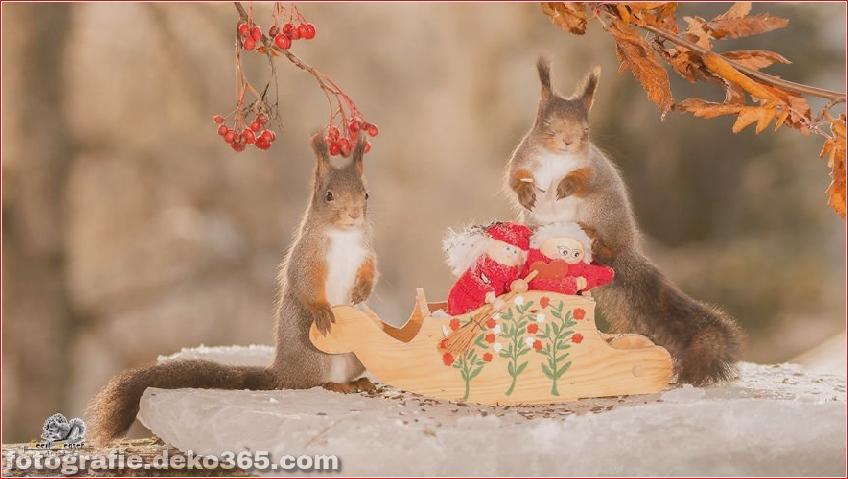 Eichhörnchen mit Weihnachten_5c8ffd148a35b.jpg