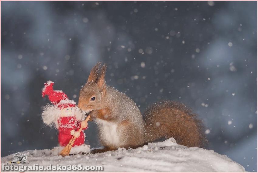 Eichhörnchen mit Weihnachten_5c8ffd15d78b8.jpg