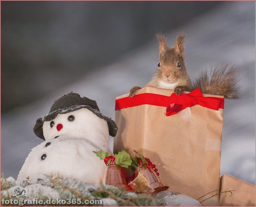 Eichhörnchen mit Weihnachten_5c8ffd176af7f.jpg