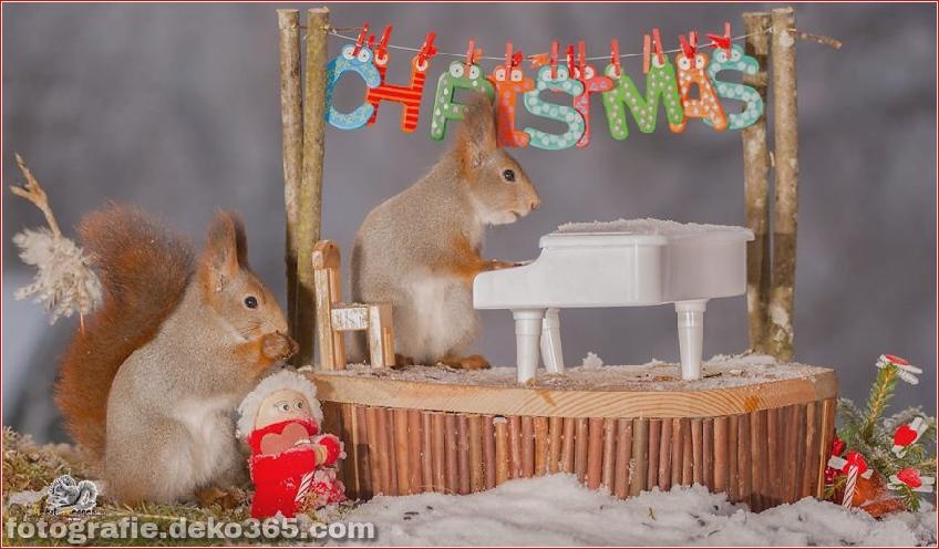 Eichhörnchen mit Weihnachten_5c8ffd1927143.jpg