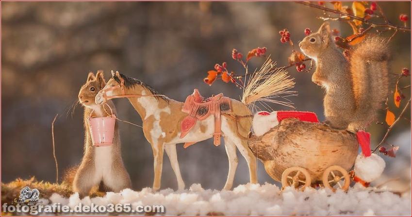 Eichhörnchen mit Weihnachten_5c8ffd1a93cfd.jpg