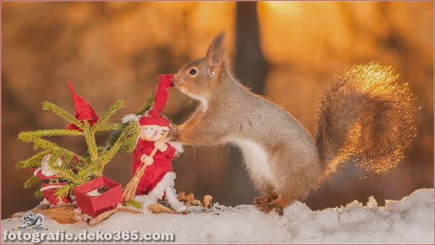 Eichhörnchen mit Weihnachten_5c8ffd1c5adc7.jpg