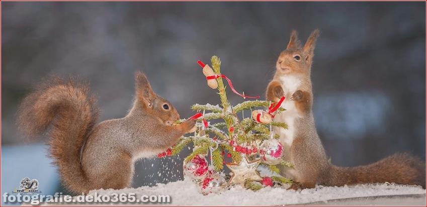 Eichhörnchen mit Weihnachten_5c8ffd1ddb22d.jpg