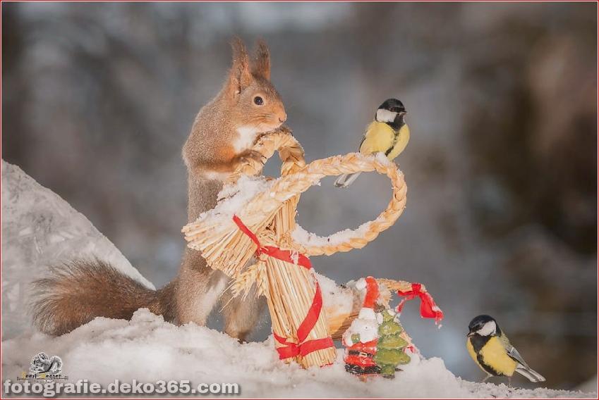 Feiere Weihnachten mit Eichhörnchen (13)