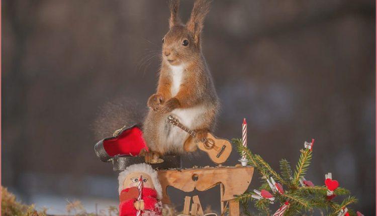 Eichhörnchen mit Weihnachten_5c8ffd210afed.jpg