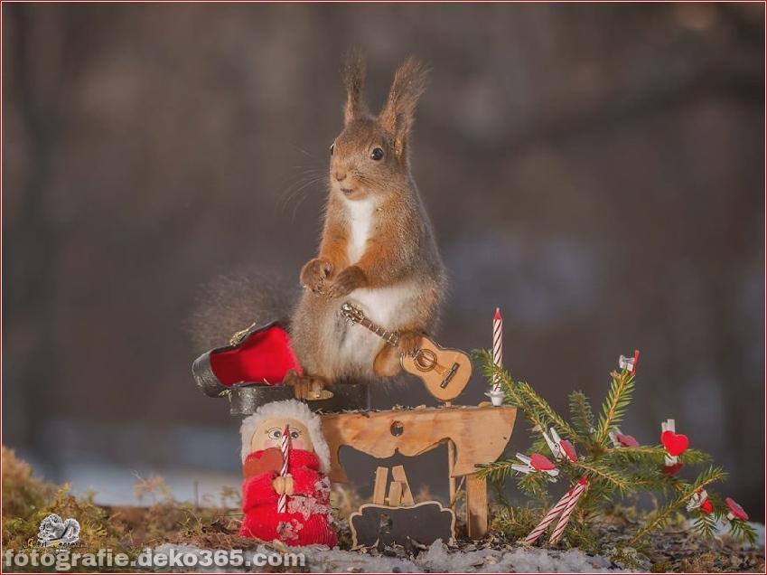Feiere Weihnachten mit Eichhörnchen (14)