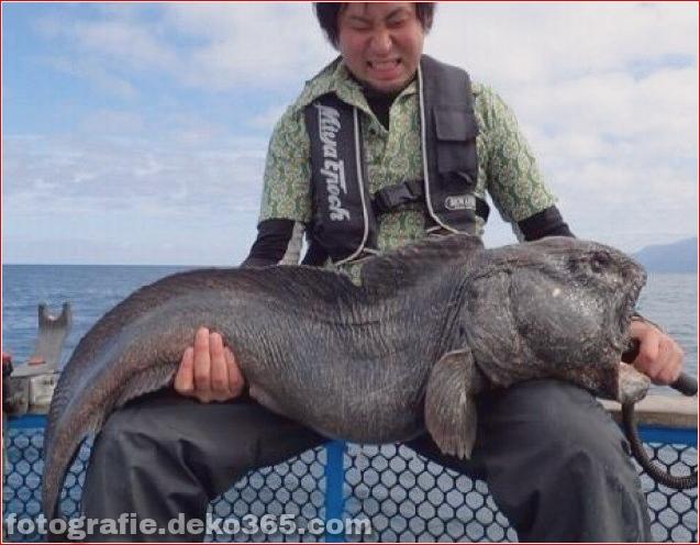 Alien Fish oder Fukushima-Katastrophe - Wolfsfisch (2)