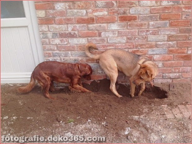 Lustige fleißige Haustiere (4)