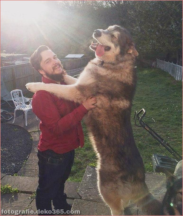 Fotografie für Hundeliebhaber_5c9006eebca07.jpg