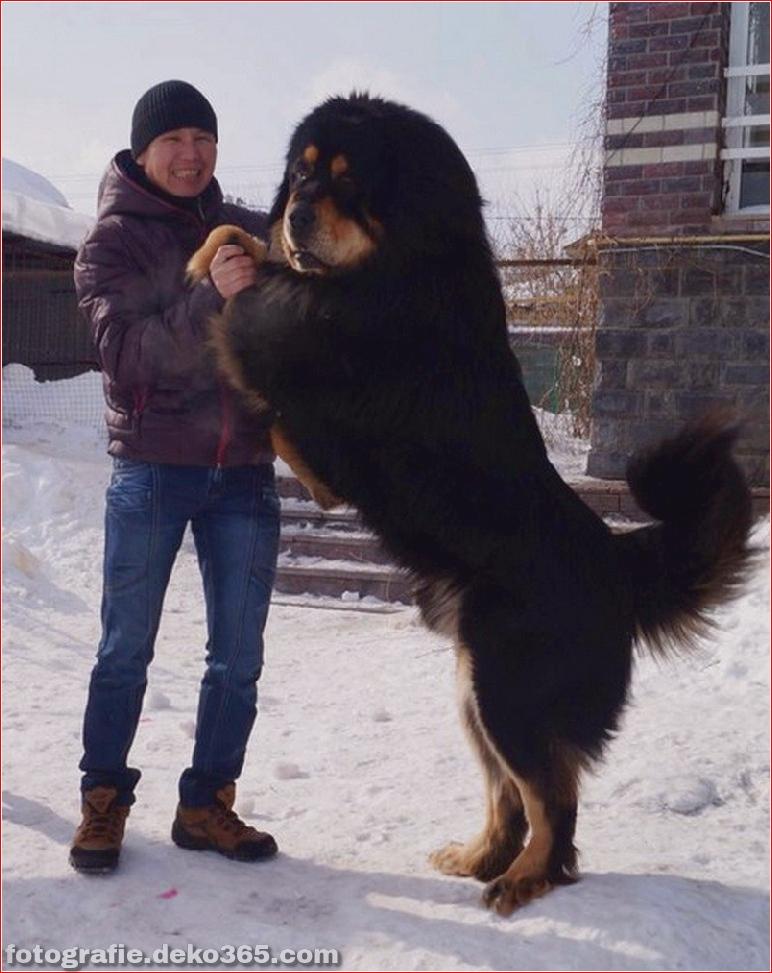 Fotografie für Hundeliebhaber_5c9006f2f0352.jpg