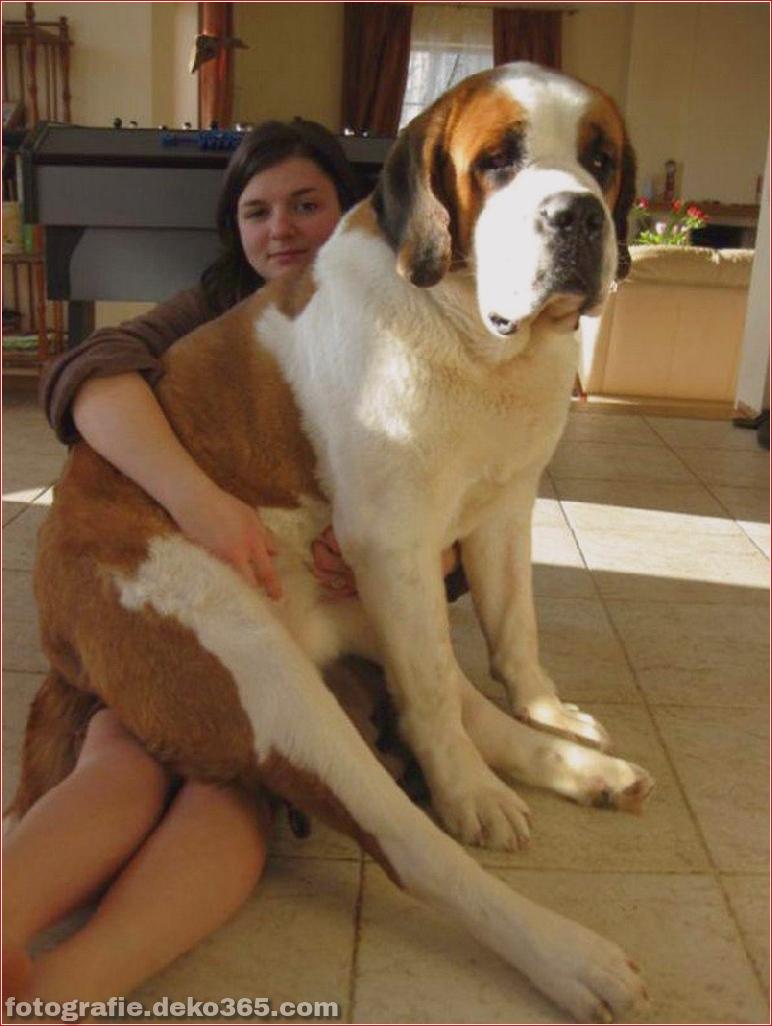 Fotografie für Hundeliebhaber_5c9006f65245c.jpg