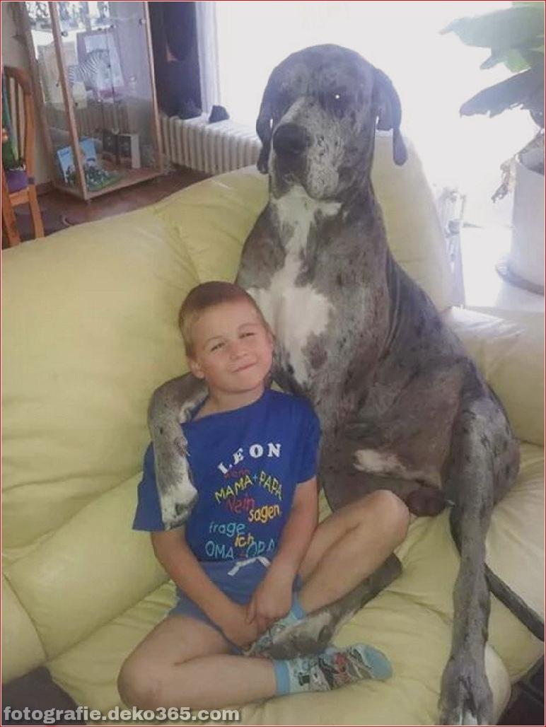 Fotografie für Hundeliebhaber_5c9006fd7d4a0.jpg
