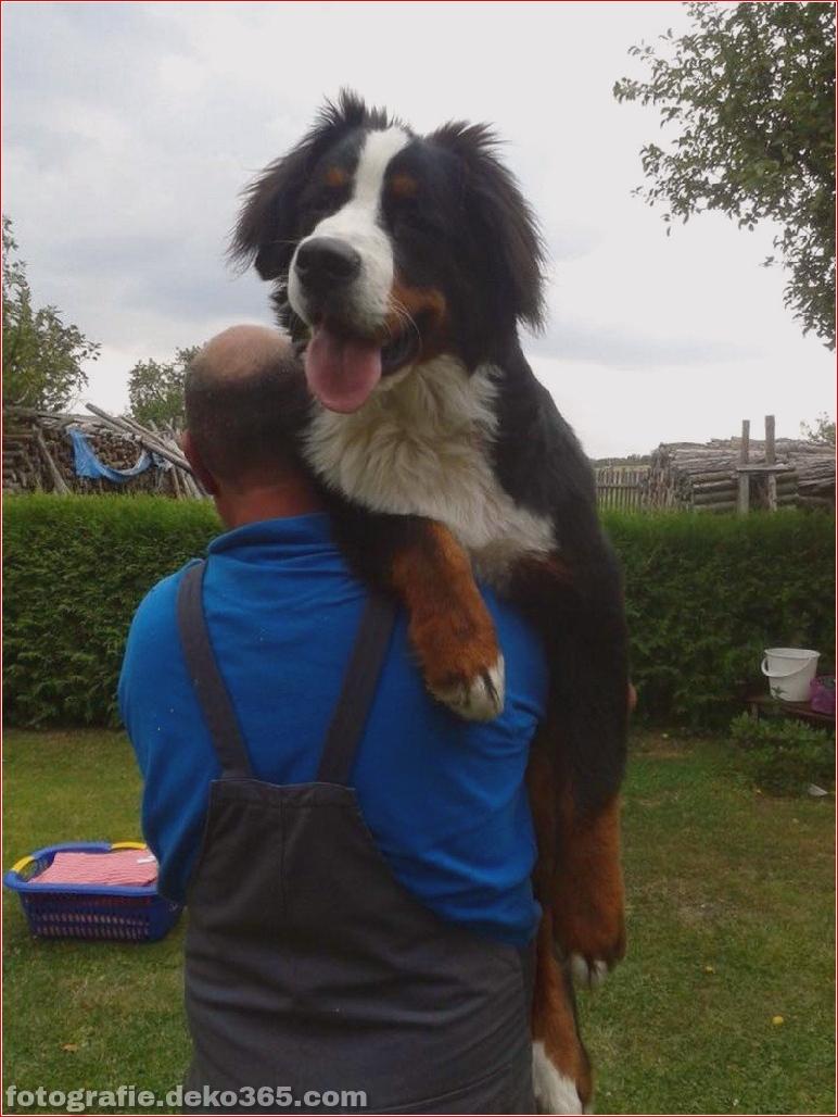 Fotografie für Hundeliebhaber_5c90070389f52.jpg