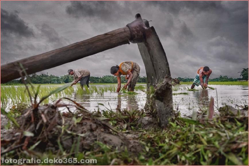 Die Beratergruppe zur Unterstützung des Poor-Photo-Wettbewerbs (17)