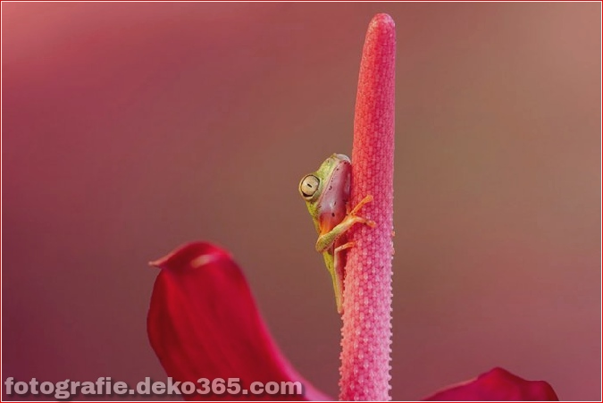 Welt der Frösche in der Makrophotographie (1)