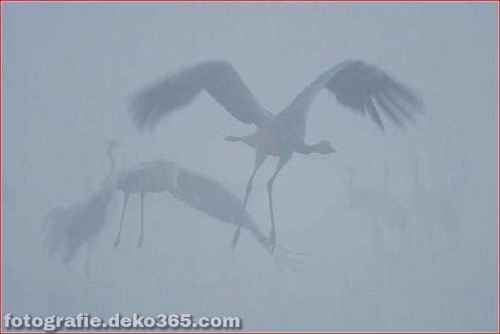 Gewinner des Wildlife Photographer_5c9065d59b705.jpg