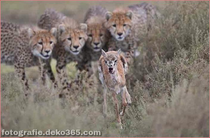 Gewinner des Wildlife Photographer_5c9065d931e6b.jpg
